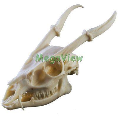 台灣動物骨骼複製品