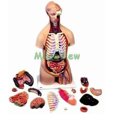 3B人體解剖模型