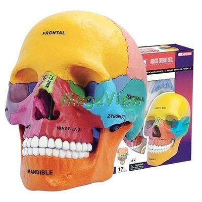 4D人體模型