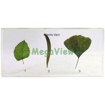 植物封膠標本