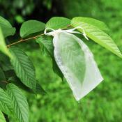 昆蟲飼養網袋