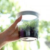 昆蟲飼養杯